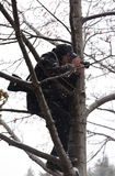 Fotograf w drzewie Zdjęcia Royalty Free