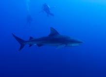 Fotografando tubarões Imagens de Stock Royalty Free