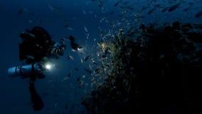 Fotografando a vida subaquática filme