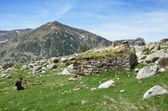Fotografare in primavera Pirenei Fotografia Stock