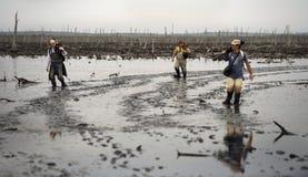 Fotografen auf einem Sumpf. Stockfotos