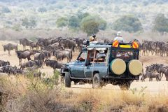 Fotografen schieten het meest wildebeest in Masai Mara stock afbeeldingen