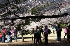Fotografen während Hanami in Tokyo Stockfotografie