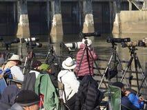 Fotografer på den Conowingo fördämningen för årlig örnflyttning fotografering för bildbyråer