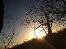 fotografi Royaltyfri Fotografi