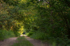 Fotografi av en väg i trät som omges fullständigt av träd Royaltyfria Bilder