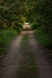 Fotografi av en väg i trät som omges fullständigt av träd Arkivbild