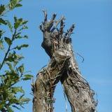 Fotografi av ett träd som ser som en hand och en arm Arkivfoton