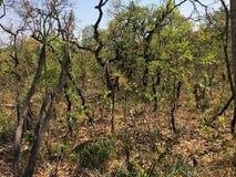 Fotografi av vegetation som skövlas av en brand royaltyfri fotografi