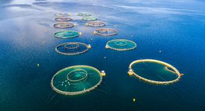 Fotografi för surr för antenn FPV för lantgårdlaxfiske Royaltyfri Fotografi