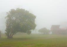 Un albero e un paesaggio nebbioso Fotografia Stock Libera da Diritti