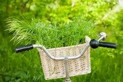 Fotografia śliczny ster bicykl z koszykowy pełnym zielona wiązka dalej Zdjęcia Royalty Free