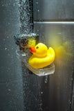 Fotografia żółta gumowa kaczka pod douche zdjęcie stock