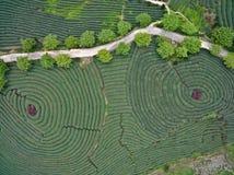 Fotografia aérea sobre a paisagem do jardim de chá da montanha imagens de stock royalty free