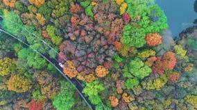 Fotografia aerea - colori botanici di autunno video d archivio