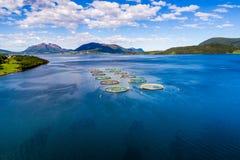 Fotografia aerea del fuco di pesca di color salmone FPV dell'azienda agricola Fotografie Stock Libere da Diritti