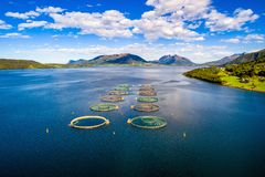 Fotografia aerea del fuco di pesca di color salmone FPV dell'azienda agricola Immagini Stock