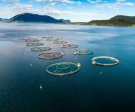 Fotografia aerea del fuco di pesca di color salmone FPV dell'azienda agricola Fotografia Stock