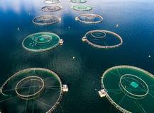 Fotografia aerea del fuco di pesca di color salmone FPV dell'azienda agricola Immagine Stock