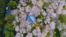 Fotografia aerea - giardino Cino-giapponese della ciliegia di amicizia video d archivio