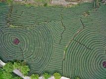 Fotografia aerea sopra il paesaggio del giardino di tè della montagna Immagini Stock Libere da Diritti