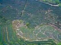 Fotografia aerea sopra il paesaggio del giardino di tè della montagna Fotografia Stock