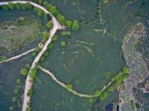 Fotografia aerea sopra il paesaggio del giardino di tè della montagna Fotografie Stock