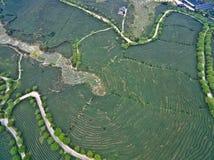 Fotografia aerea sopra il paesaggio del giardino di tè della montagna Immagini Stock