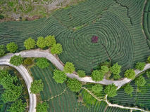 Fotografia aerea sopra il paesaggio del giardino di tè della montagna Fotografia Stock Libera da Diritti