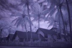 Fotografia all'infrarosso delle palme e dei bungalow Fotografie Stock
