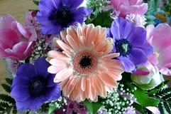 Fotografia alta vicina della natura Composizione nel fiore di Gerber Fotografia Stock
