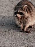 Fotografia animal Foto de Stock