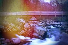 Fotografia artística abstrata da natureza no parque nacional de Great Smoky Mountains fotografia de stock