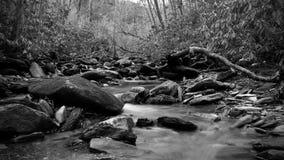 Fotografia in bianco e nero della natura di un fiume di urlo nel legno profondo del parco nazionale di Great Smoky Mountains Fotografie Stock