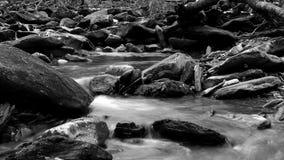 Fotografia in bianco e nero di un fiume nel legno di Great Smoky Mountains Immagini Stock