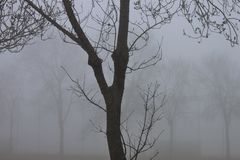 fotografia in bianco e nero di un giorno nebbioso immagine stock