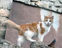 Fotografia bonita bonito do estoque do gato foto de stock