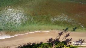 Fotografia bonita de oceano emocionante com estouro da onda perto do litoral com as árvores exóticas na ilha maui, Havaí filme