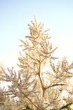 Fotografia bonita do específico da estação do verão/mola Flores brancas pequenas e folhas que crescem em ramos Fundo do céu azul  ilustração stock