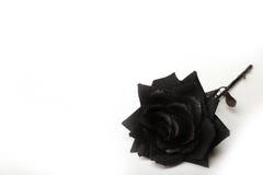 Fotografia Czarna róża na Białym tle Zdjęcia Royalty Free