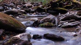 Fotografia da água do rio nas madeiras do parque nacional de Great Smoky Mountains imagem de stock