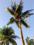 Fotografia da árvore Fotos de Stock Royalty Free
