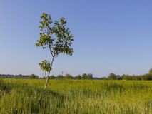 Fotografia da árvore da paisagem Imagem de Stock