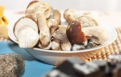 Fotografia da colheita do outono de cogumelos da floresta Fotos de Stock Royalty Free