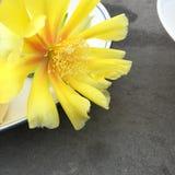 Fotografia da decoração interior, pintura, ainda vida, etc. Flores bonitas Fotos de Stock