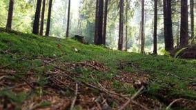 Fotografia da floresta Fotos de Stock