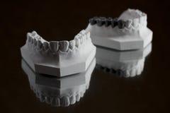 Fotografia da maxila mais baixa em um fundo preto Imagem de Stock Royalty Free