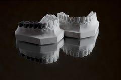 Fotografia da maxila mais baixa em um fundo preto Fotografia de Stock