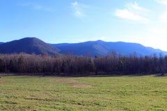 Fotografia da natureza das madeiras no parque nacional de Great Smoky Mountains fotografia de stock