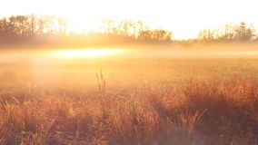 Fotografia da natureza de um nascer do sol sobre um campo dos fazendeiros com névoa e orvalho pesados fotos de stock